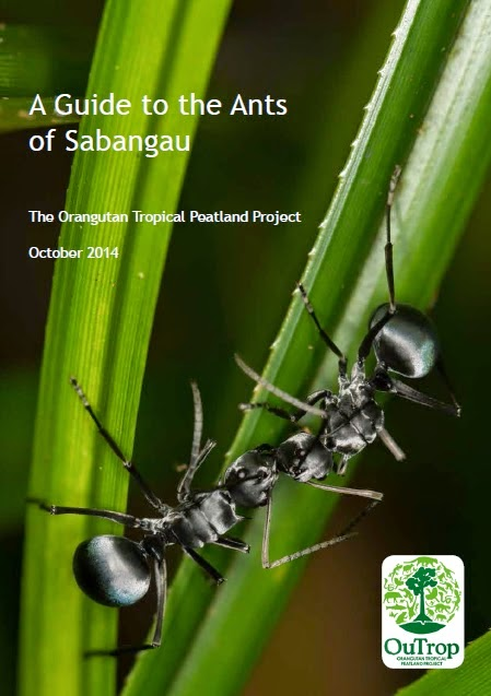 Kalimantan_ant-guide
